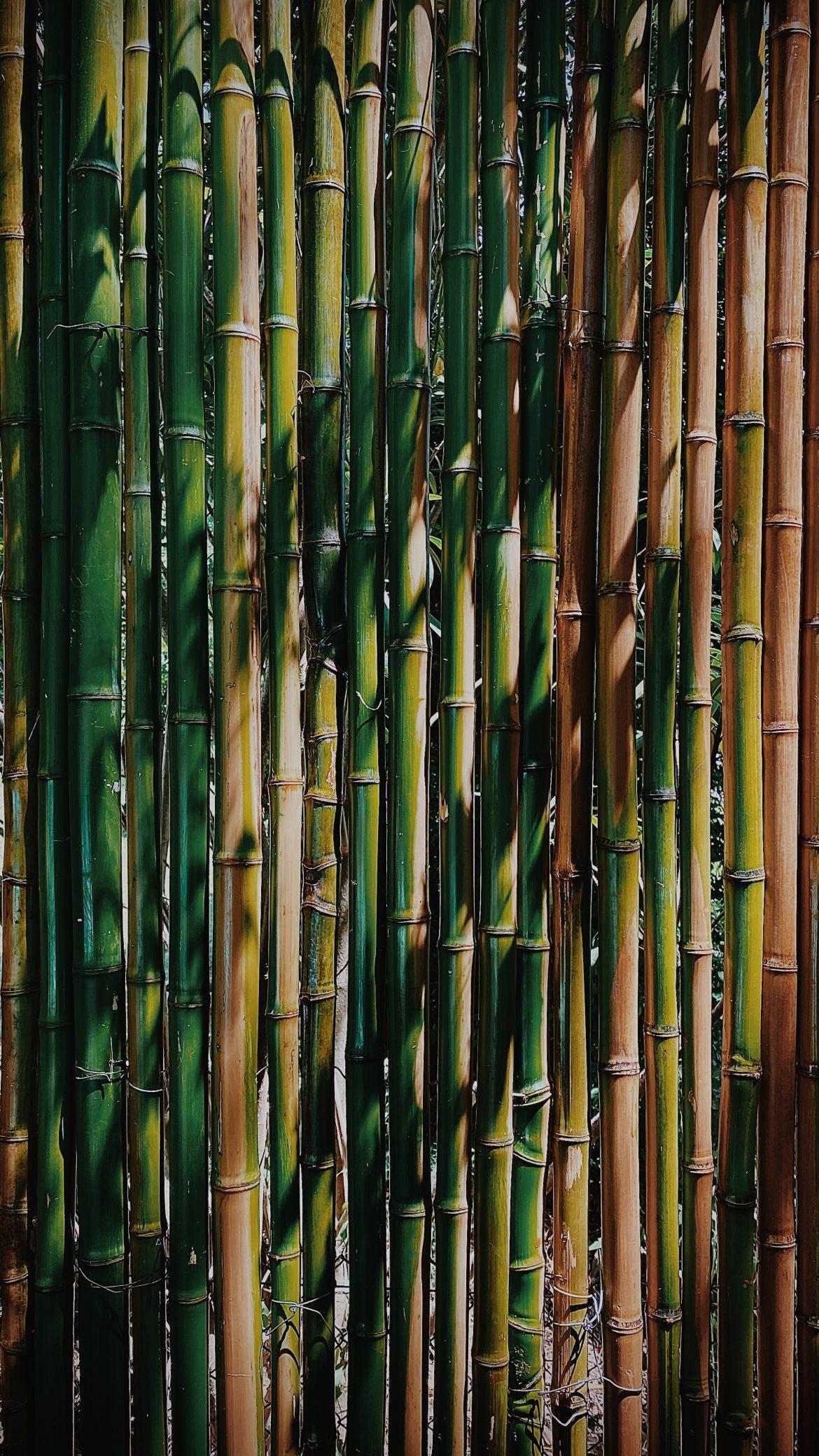 Bamboe t-shirts
